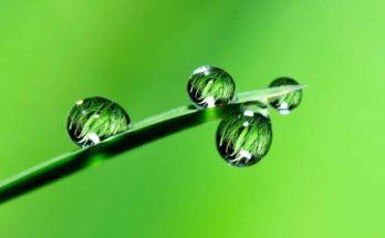 hierbas para limpiar el riñon